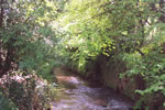 The river Combe Florey